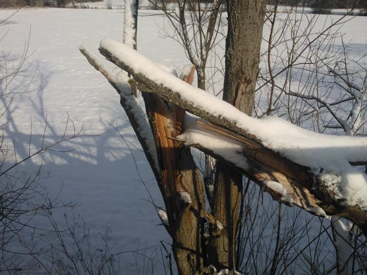 Ein knick im Holz