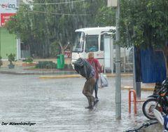 Ein Königreich für einen Regenschirm