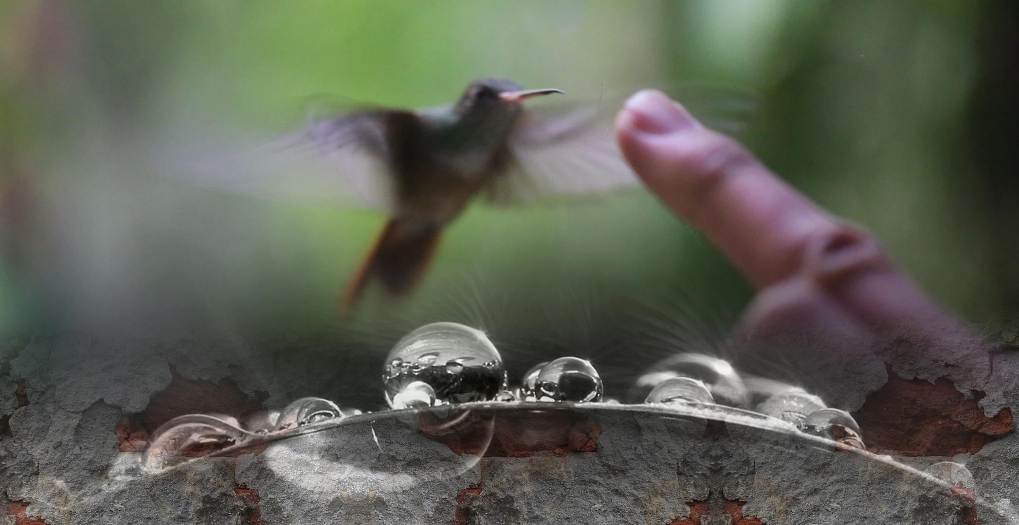 Ein Kolibri...