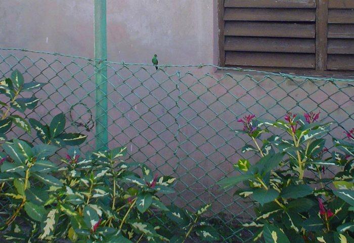 ein kolibrie in freier natur - macht das mal nach ;)