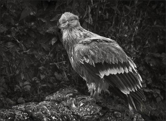 Ein komischer Vogel ...