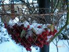 Ein Korb mit Schnee