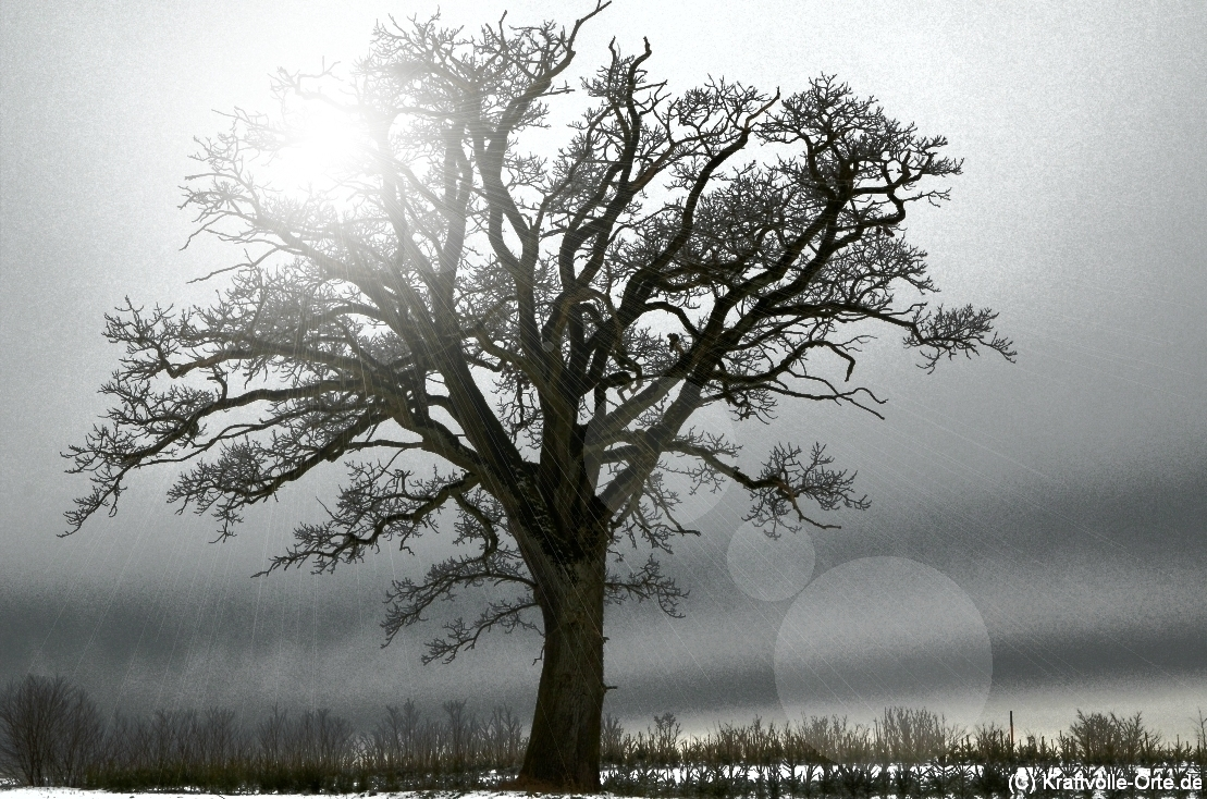 Ein kraftvoller Baum