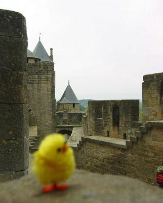 Ein Kücken auf Carcassonne / Frankreich