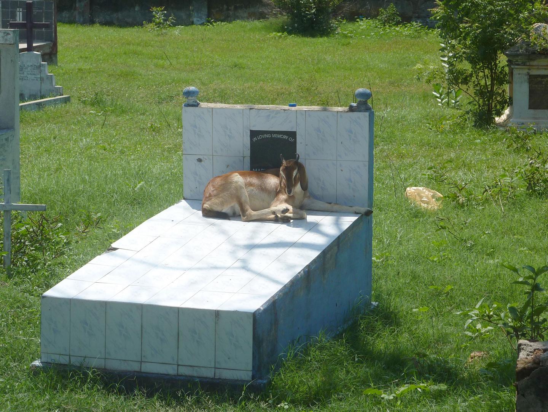 Ein kühler Platz zur Mittagsruhe