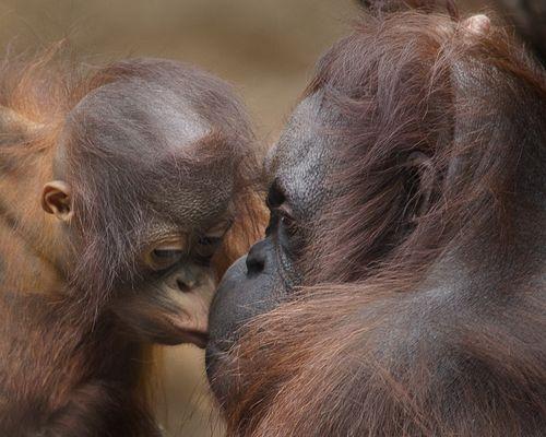 Ein Küsschen für Mama