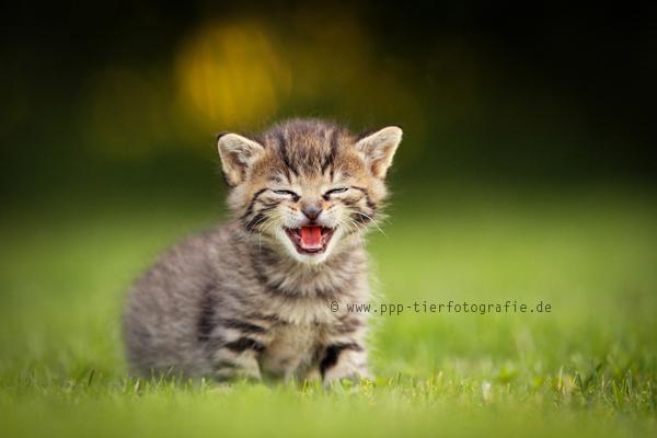 Ein Lächeln am Morgen vertreibt Kummer und Sorgen
