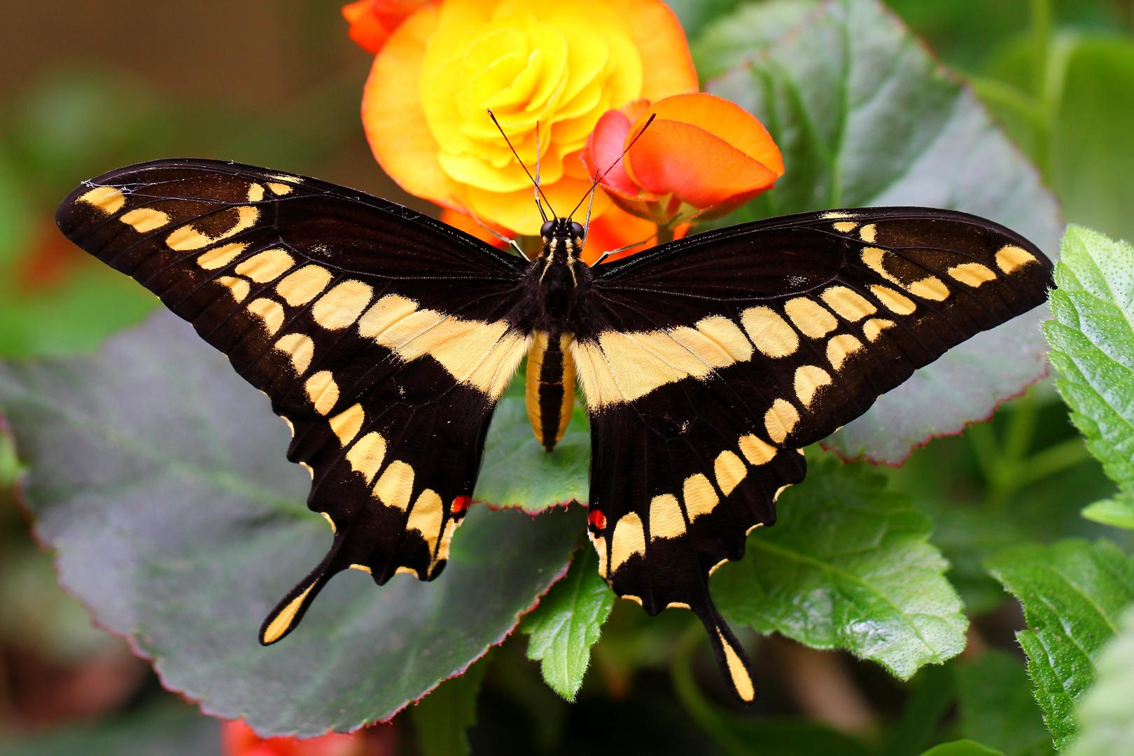 ein Lächeln von einem Schmetterling