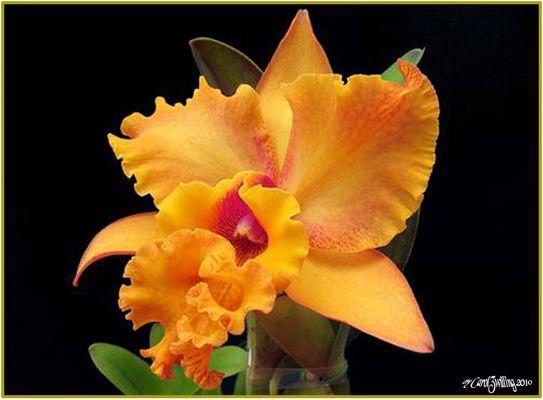 Ein Lächeln von Orchideen