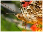 Ein lächelnder Schmetterling