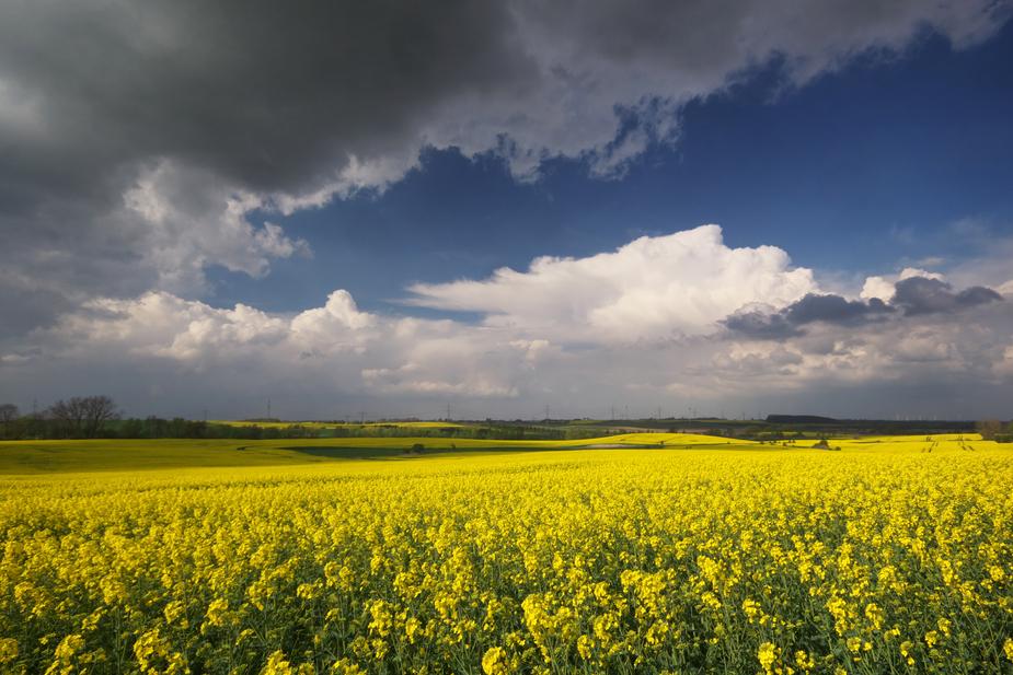Ein Land in Gelb