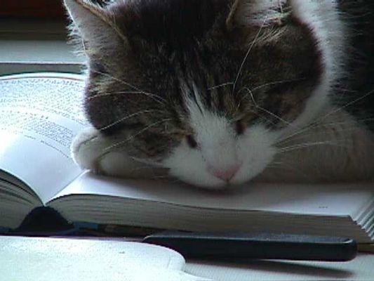 Ein langweiliges Buch....