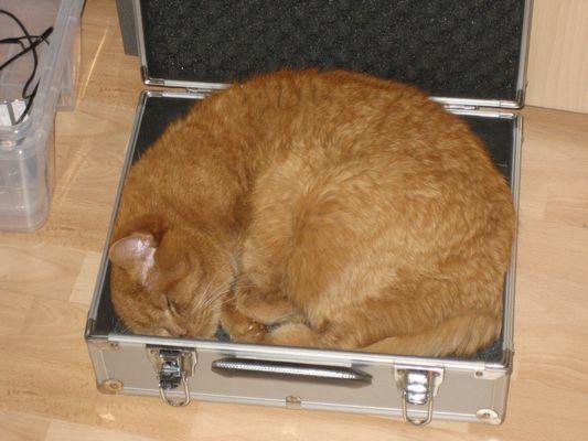 Ein leerer Fotokoffer - schööön!