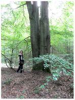 ein letzter Blick auf die Baeume im Wald !