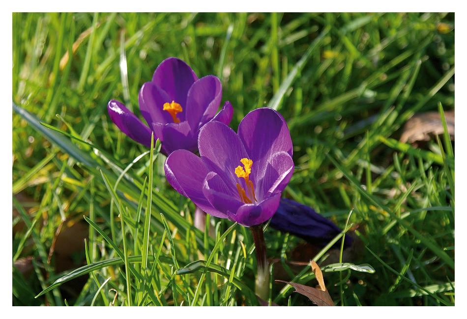 Ein letzter Frühlingsgruß