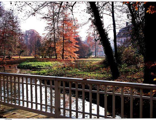 Ein letzter Gruss aus dem Herbst  in Branitz (1)