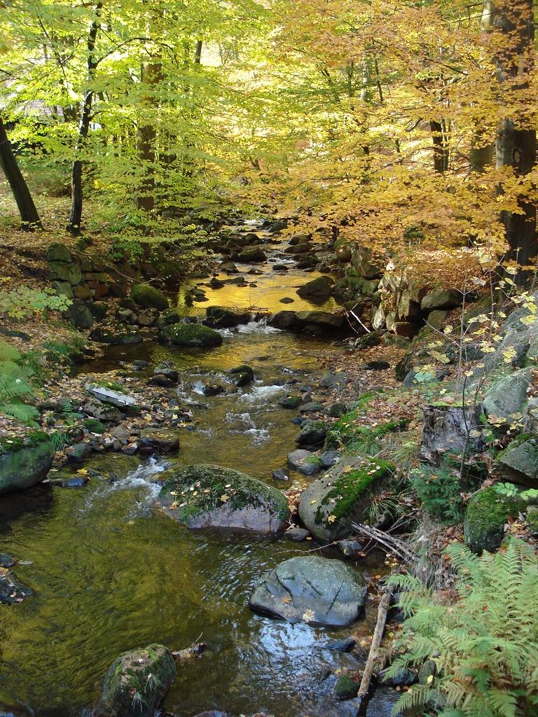 Ein letzter Herbstgruß aus dem schönen Ilsetal.