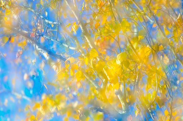 *** Ein letztes Aufbäumen des Herbstes ... ***