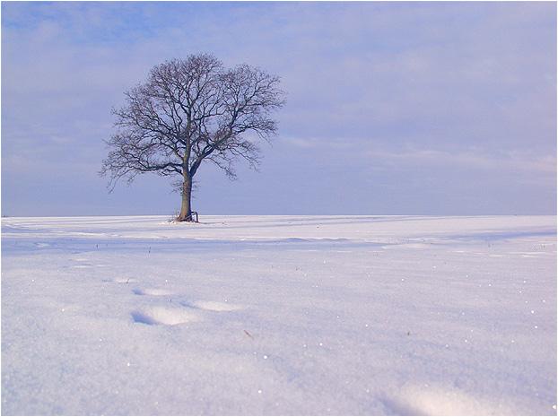 Ein letztes Mal im Schnee.........