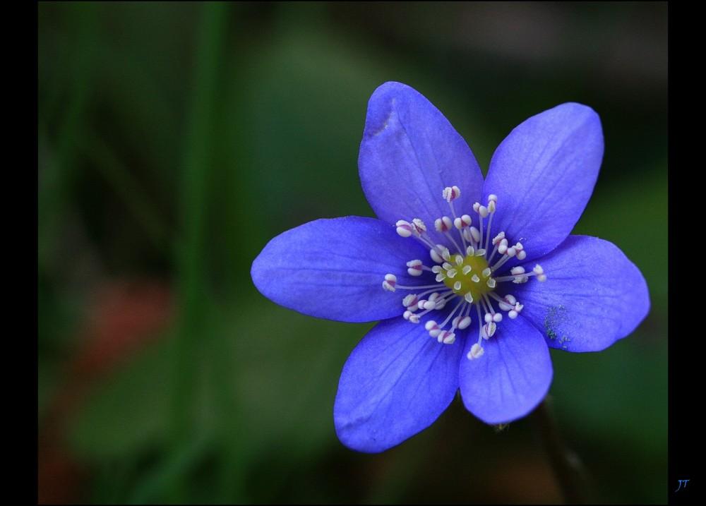 ...ein leuchtendes Blau...
