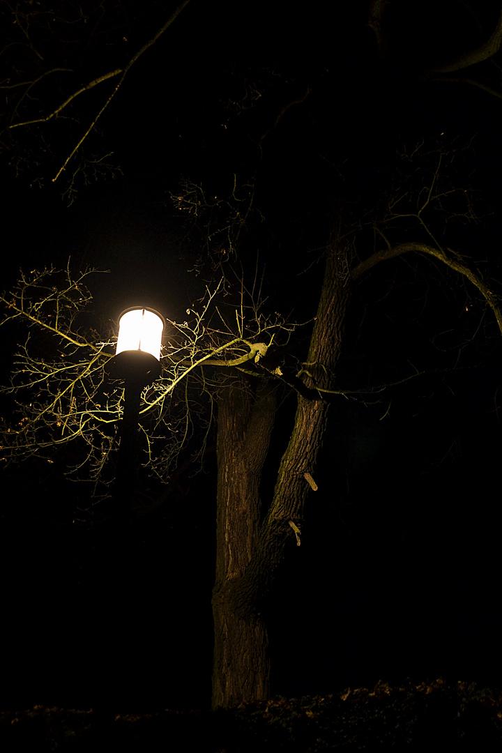 Ein Licht ist aufgegangen