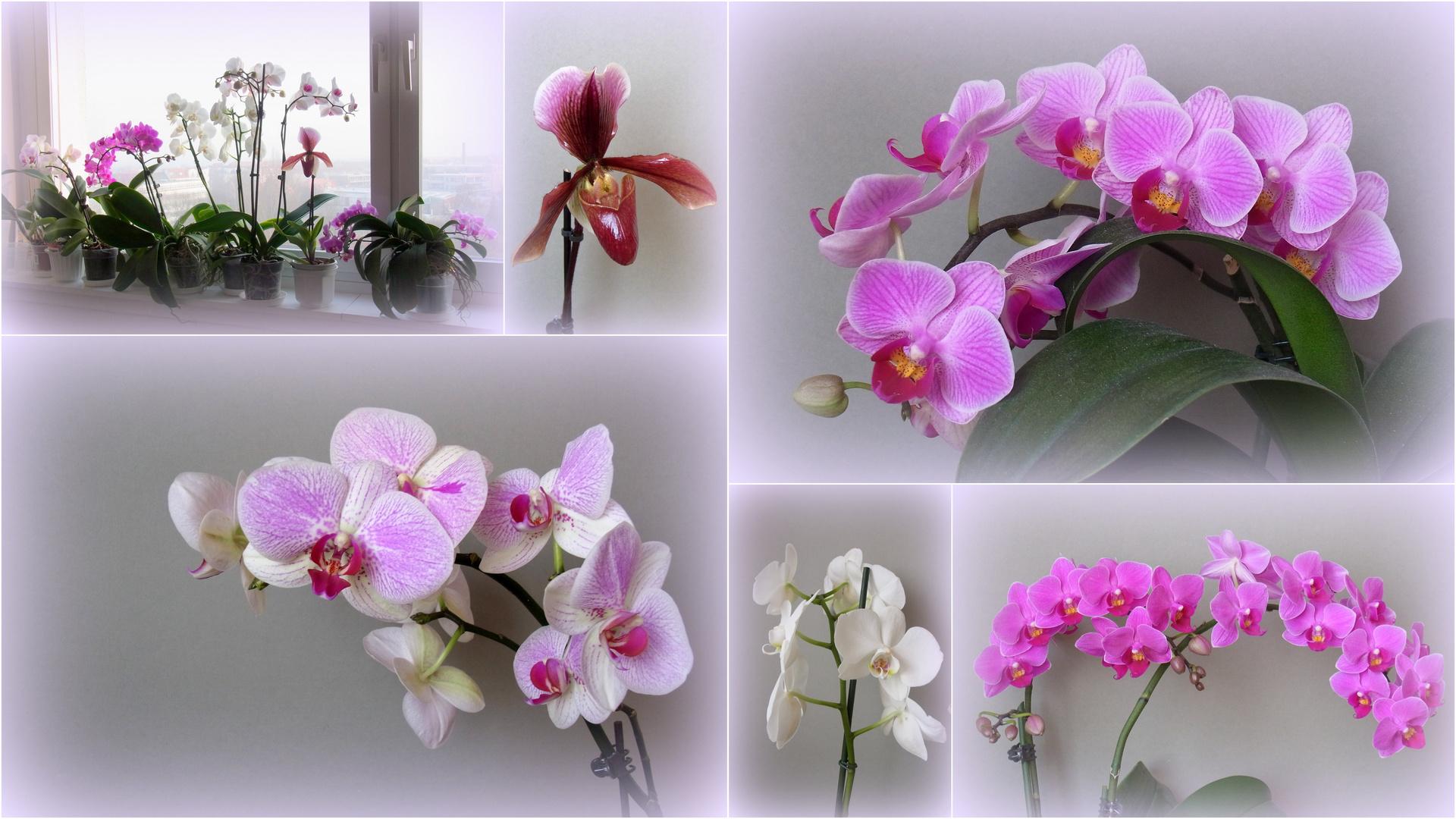 Ein lieber Orchideengruß