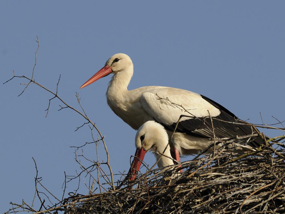 Ein Liebespaar im Nest