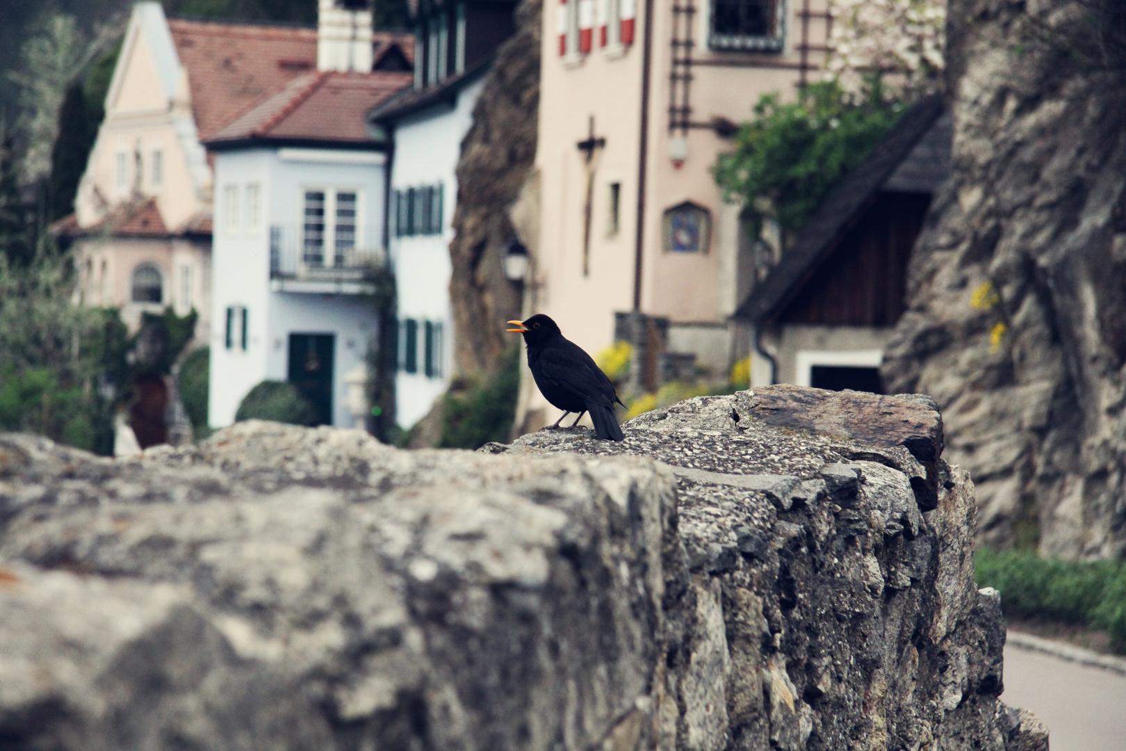 Ein Lied von den Vögeln ist die schönste Melodie in den Ohren.
