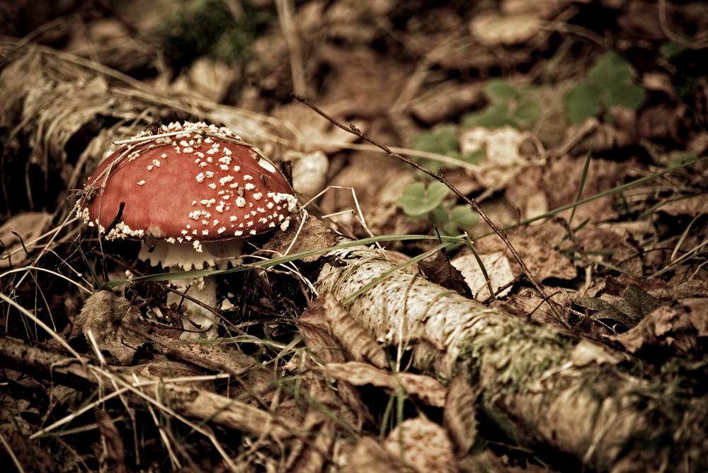 ...ein Männlein steht im Wald...