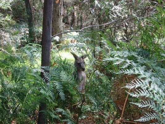 Ein Männlein steht im Walde ..