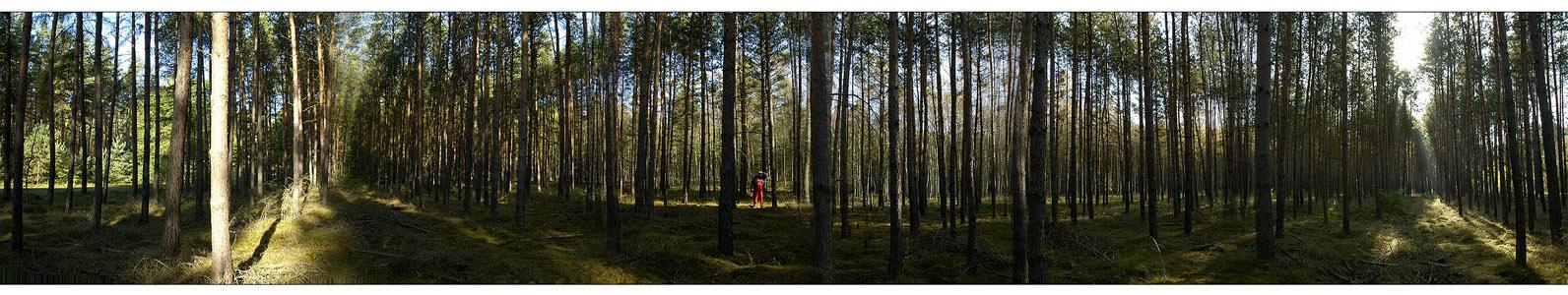 Ein Männlein steht im Walde.