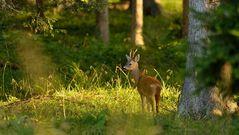Ein Männlein steht im Walde....