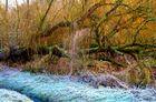 Ein Märchenbaum im Eis