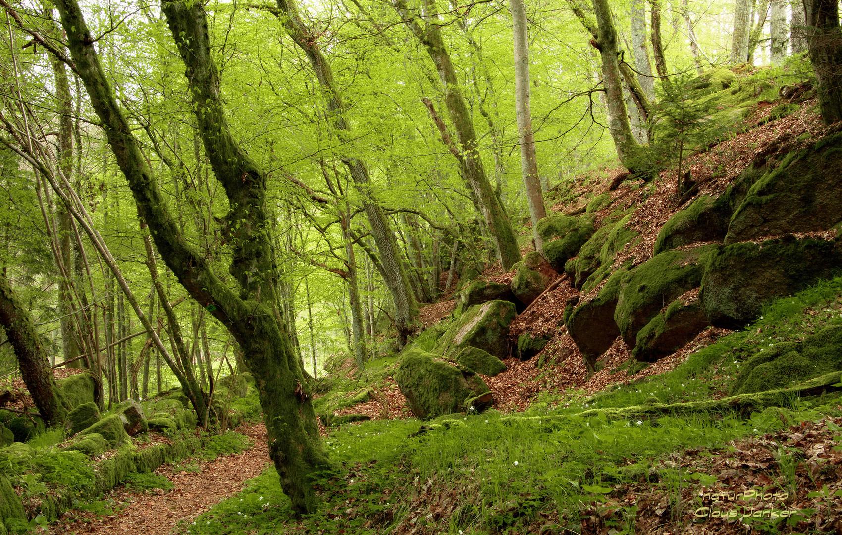 Ein Märchenwald im April