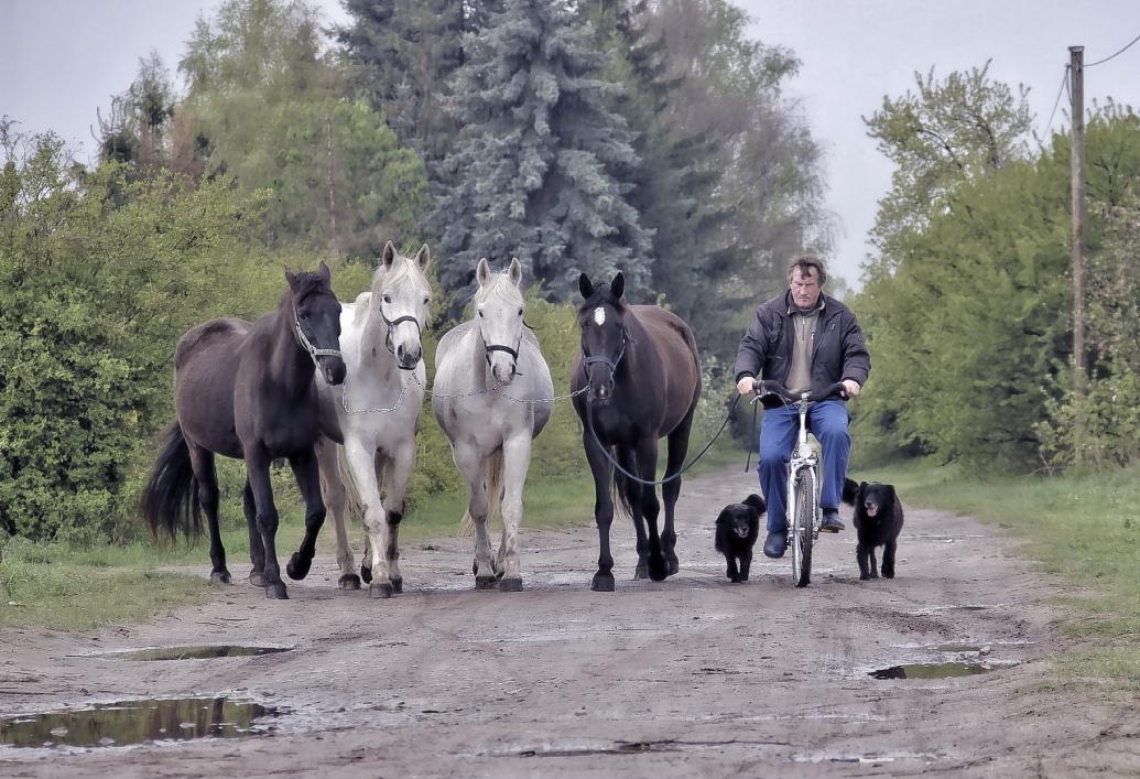 ...ein Mann, ein Rad, vier Pferde & zwei Hunde
