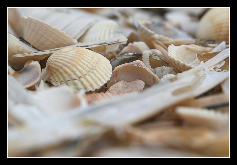 Ein Meer an Muscheln