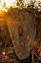 Ein Meisterwerk, wenn auch ein kleines nur, geheimnisvolles Wunder der Natur.