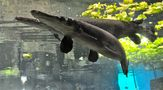 ein mir unbekannter Fisch von Wolfgang Kroll