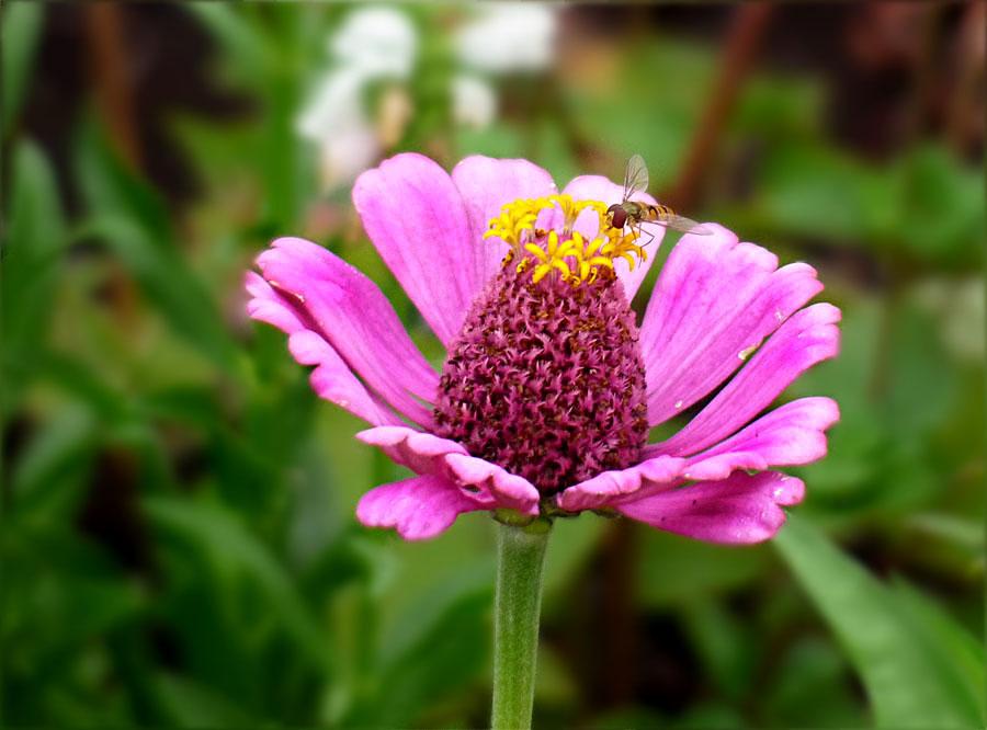 Ein Mittwochsblümchen
