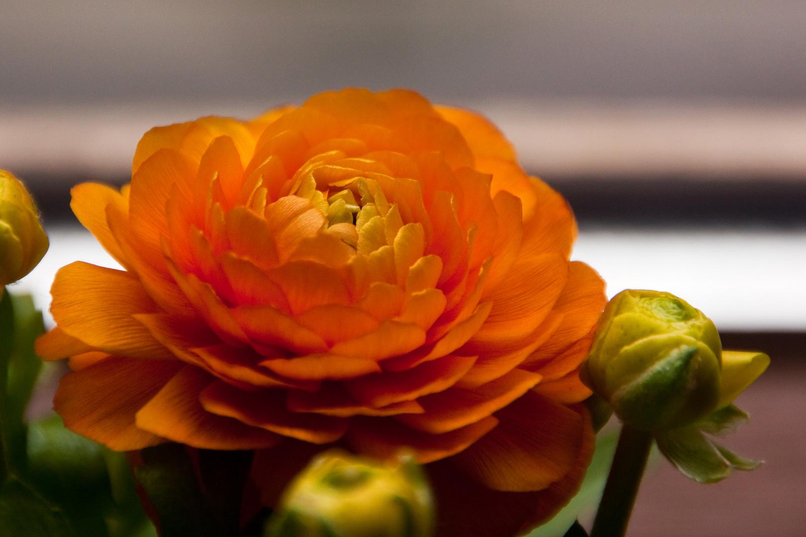 Ein Mittwochsblümchen für Euch