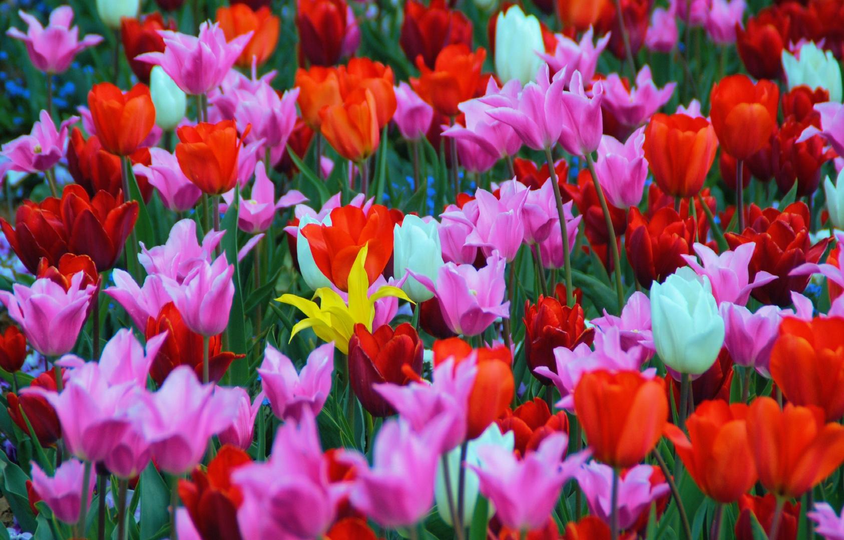 Ein Mittwochsblümchen unter vielen Mo,Di,Do,Fr,Sa+So-Blumen V