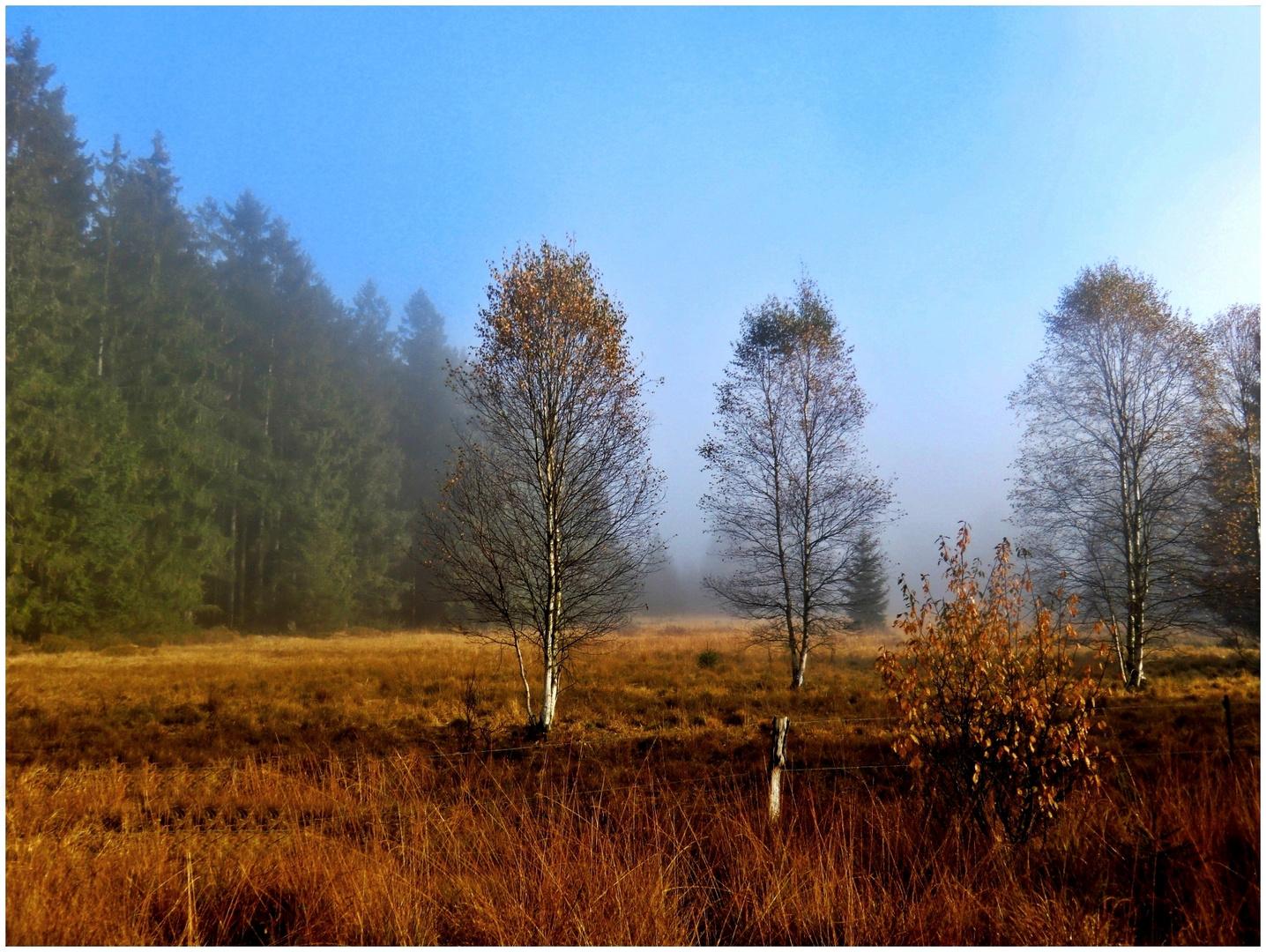 Ein Morgen im Moor (4)