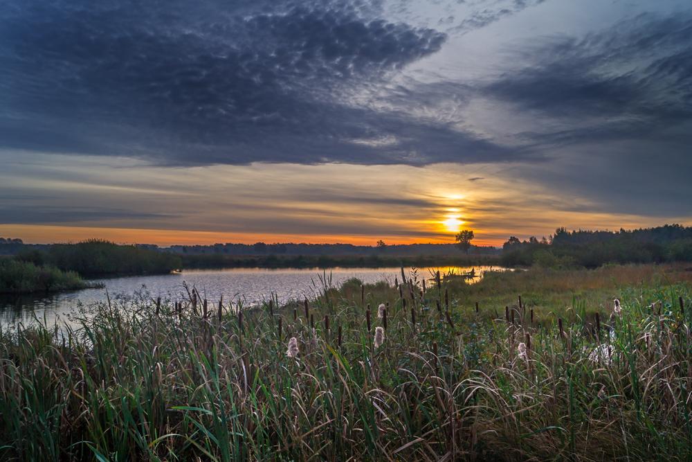 Ein Morgen im Moor