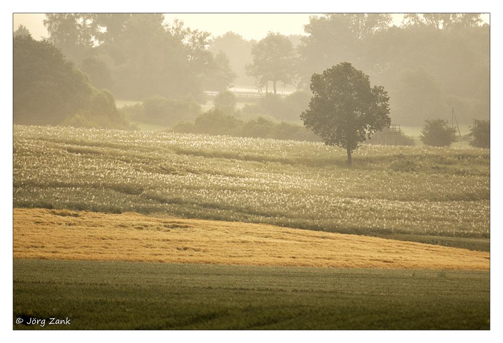 Ein Morgen im Sommer