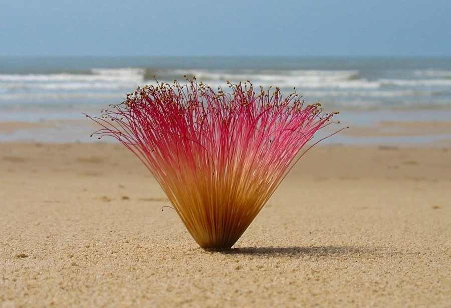 Ein Motiv am Strand von Markus Faroß im August 2012!