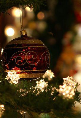 ...ein Motiv für Weihnachtskarten?