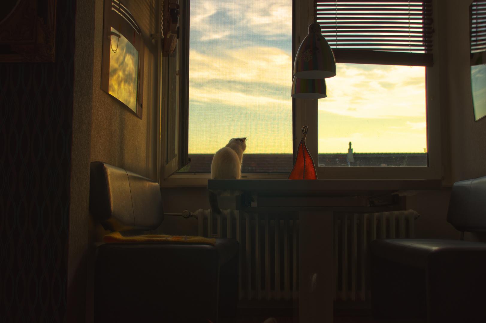 Ein Nachmittag am Fenster