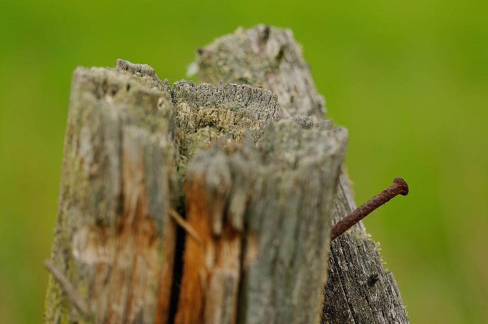 Ein Nagel saß in einem Stück Holz. Der war auf seine...