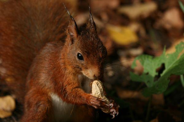 """Ein """"Naschhörnchen"""""""