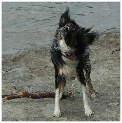 Ein nasser Hund.....